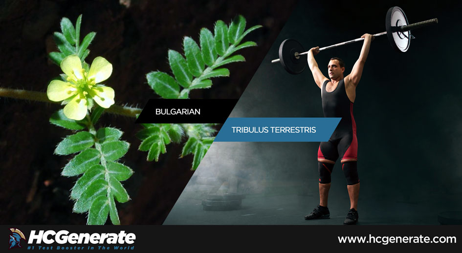 tribulus terrestris bodybuilding reviews
