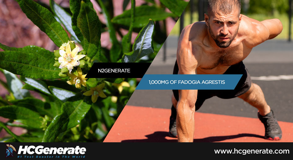 fadogia agrestis dosage for testosterone